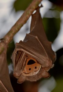 bat hanging upside down with a jack o lantern face on it
